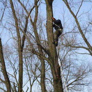 Wycinka Pielęgnacja Drzew